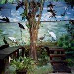 Educational Bird Migration Exhibit Belize