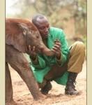 SHELDRICK'S Orphaned Baby Elephants & Baby Rhinos in Kenya.