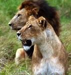 LION CONSERVATION FUND